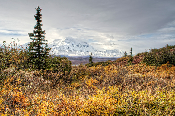 Denali in the Fall Tundra