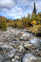 Fall Stream In Denali Park