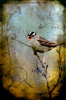 White Crowned Sparrow Art