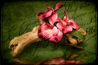 Flowers on Driftwood Composite