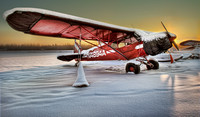 Red Cub in the Snow