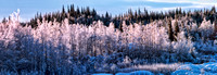 Frosty Trees Panorama