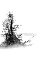 Foggy Tree Island BW