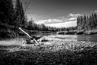 Stump Along the Chena River