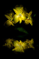 3 Yellow Flowers Reflection